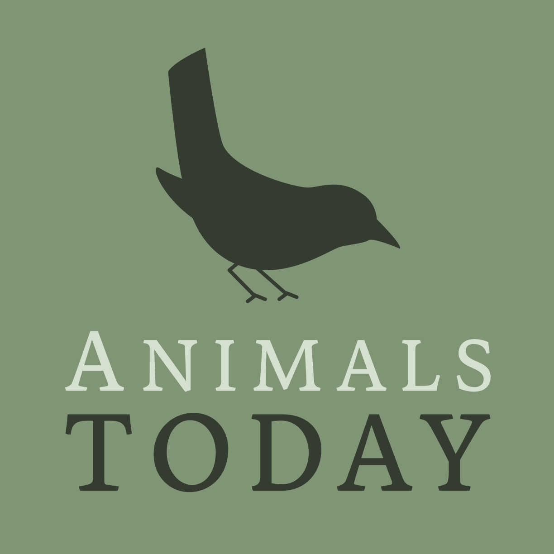 Stichting Animals Today